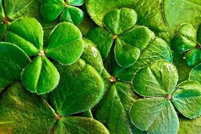 Ireland shamrocks-Pix 290.jpg