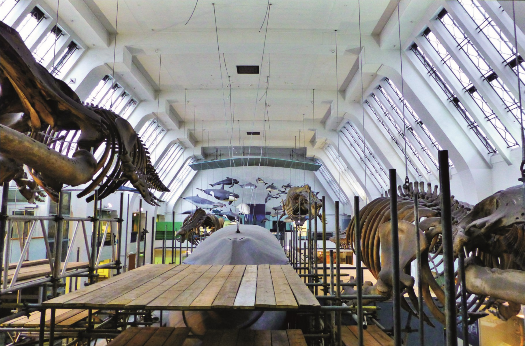 The whale hall at the Natural History Museum.jpg