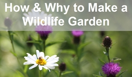 File:How to make a wildlife garden 270.jpg
