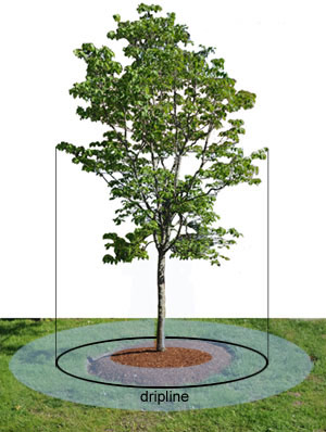 Tree Dripline Designing Buildings Wiki
