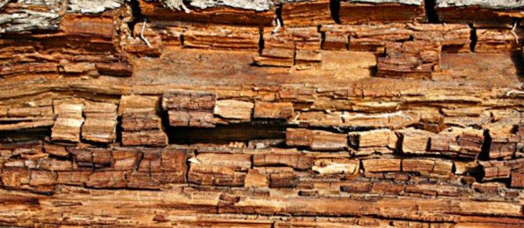 Timber Preservation Designing Buildings Wiki
