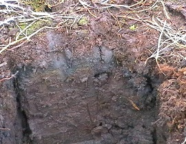 Types of soil designing buildings wiki for Kinds of soil wikipedia