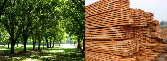 Timber Vs Wood Designing Buildings Wiki