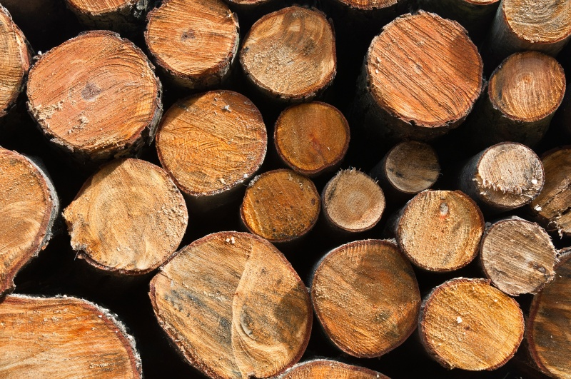 File:Pile of wood from forrest.jpg