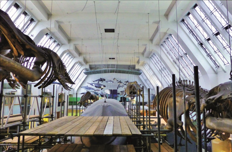 File:The whale hall at the Natural History Museum.jpg