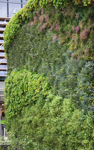 File:Cheshire Oaks - Living Wall.JPG