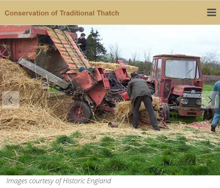 File:Conservation of Thatch2017.JPG