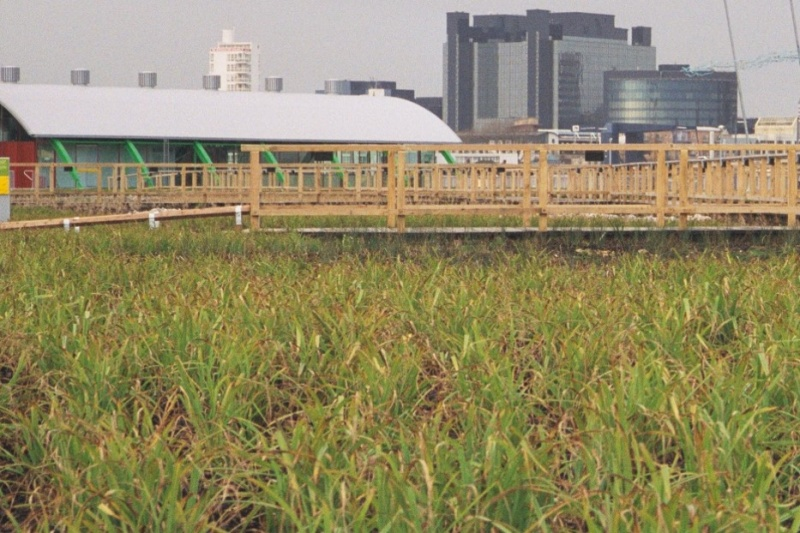 File:Millennium Dome reed beds and Greenwich Pavilion.jpg